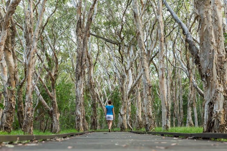 Image of woman walking through Melaleuca trees on the Kommo Toera Trail, Mackay