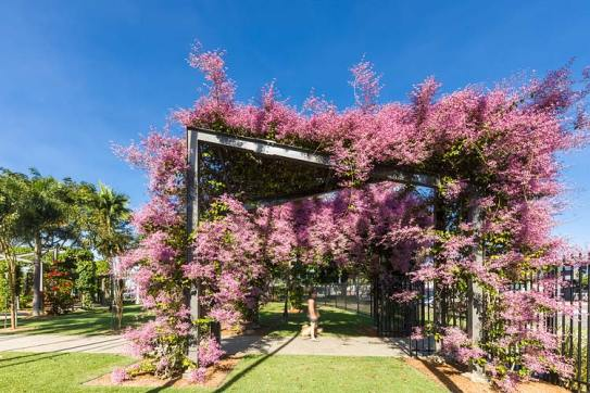 A visitor walking under an arbour walkway laiden with pink flowers in bloom
