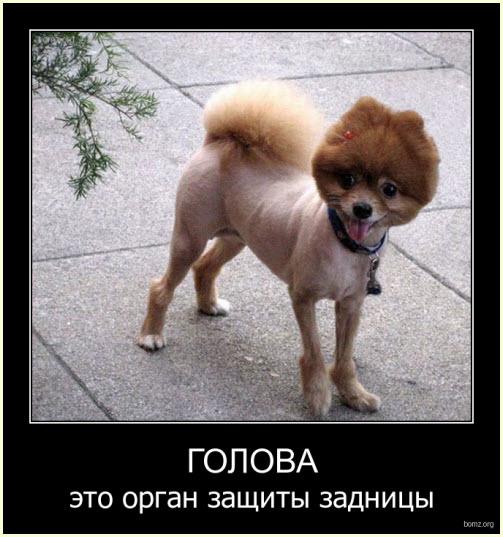 головастая собака