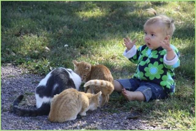 Ребёнок и кошки