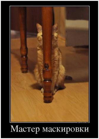 Хитрый кот. Демотиватор.