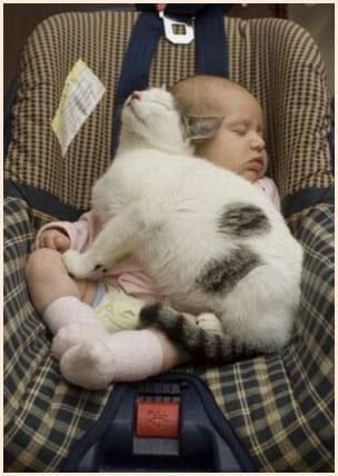 Удобно и тепло малышу и коту