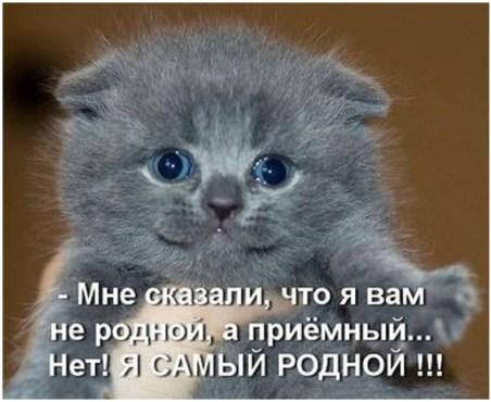 Очаровательный котёнок