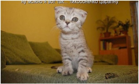 Котёнок Мурзик хочет царапаться