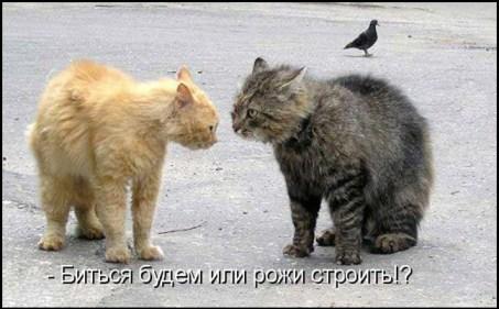 Забияки коты