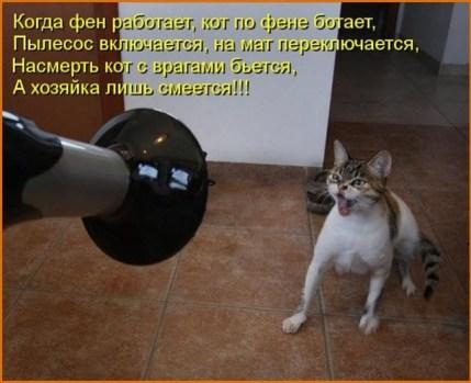 """Кот """"воюет"""" с электроприборами"""