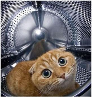 Кот нашёл укрытие в стиральной машине