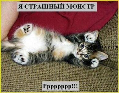 Котёнок пугает своими коготочками