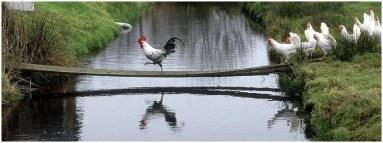 Черная курица краткое содержание для читательского