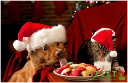 Пёс и кот отмечают новогодний праздник