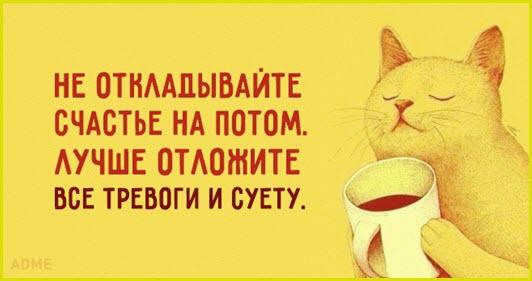 Картинка с кайфующим котом