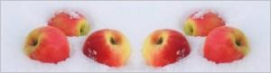 Яблоки на снегу как символ беспомощности