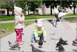 Дети и голуби