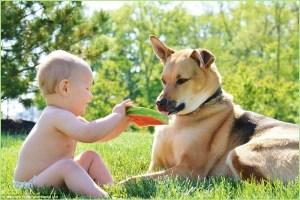 Малыш собаке предлагает арбуз