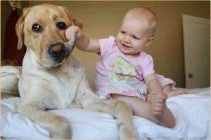 Малышка изучает свою собаку