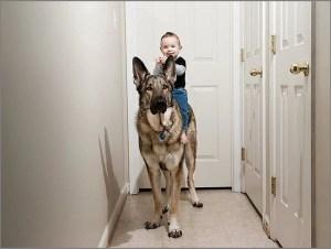 Мальчуган оседлал собаку
