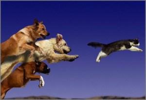 Собаки несутся за кошкой