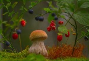 Милый грибочек