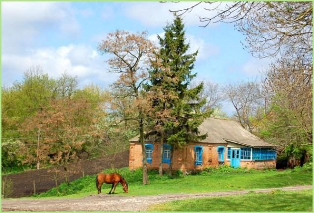 Лошадь в деревне