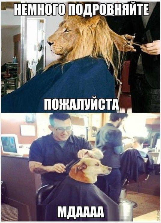 Прикольная причёска
