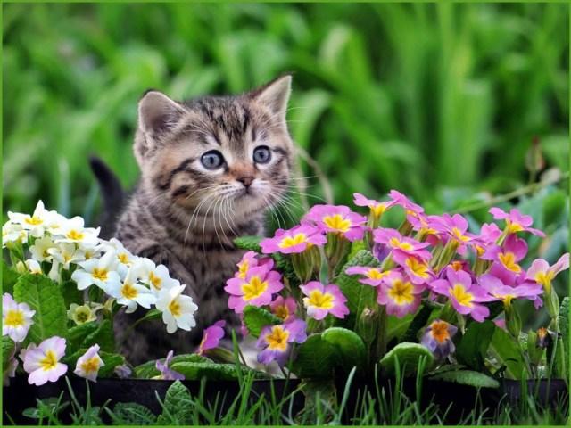 Котёнок в цветах