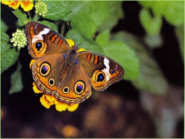 картинка жёлтая бабочка