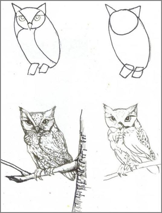 Сову поэтапно нарисовать