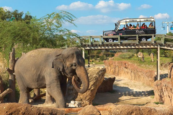BGT+Elephant_Near_Rhino_Rally.jpg