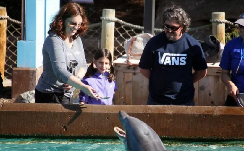 Onde encontrar e acariciar os golfinhos no SeaWorld