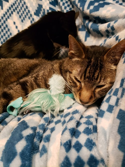Firefly cuddling with his ostrich toy