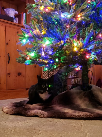 Tonks and the Christmas Tree - 2020 version