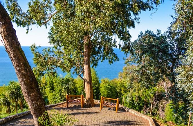 Что посмотреть в окрестностях Батуми - Ботанический сад
