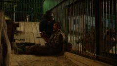 Godina majmuna (2018) domaći film gledaj online