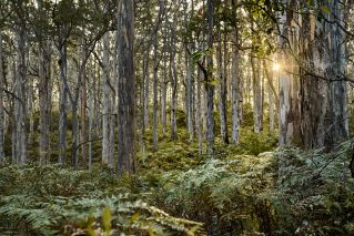 Boranup Forest, South West