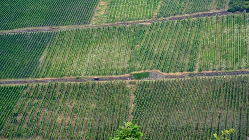 Виногрвдники Мозель Бахарах (2)