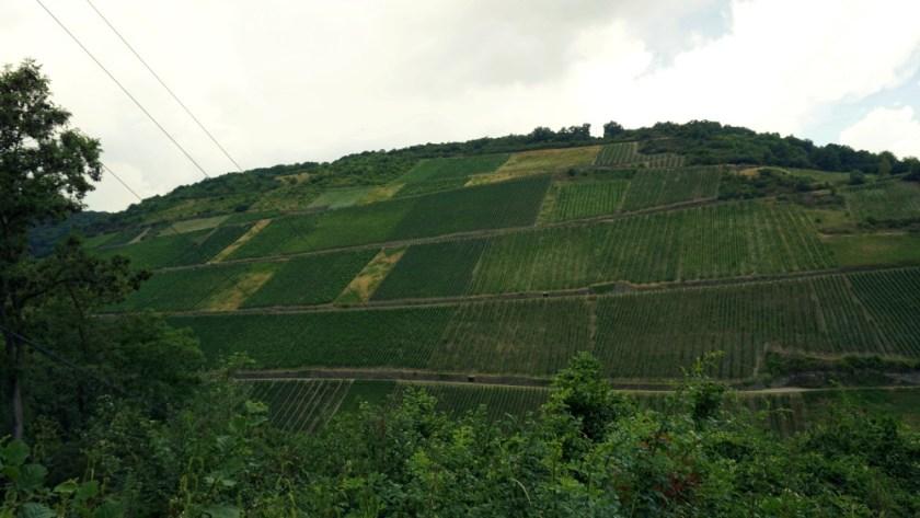 Виногрвдники Мозель Бахарах (3)