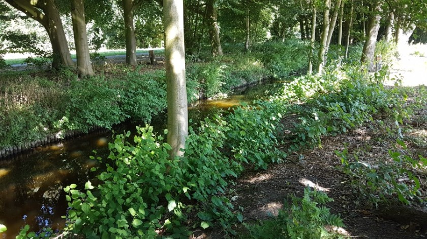 Camping Amsterdam Forest (2)