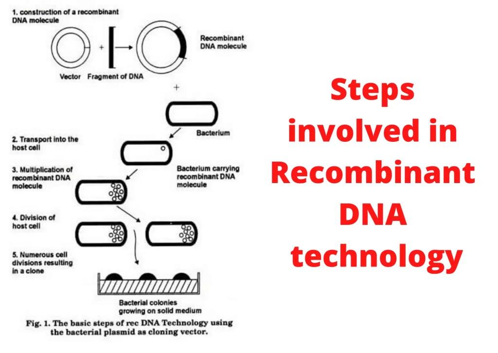 Steps involved DNA technology 7