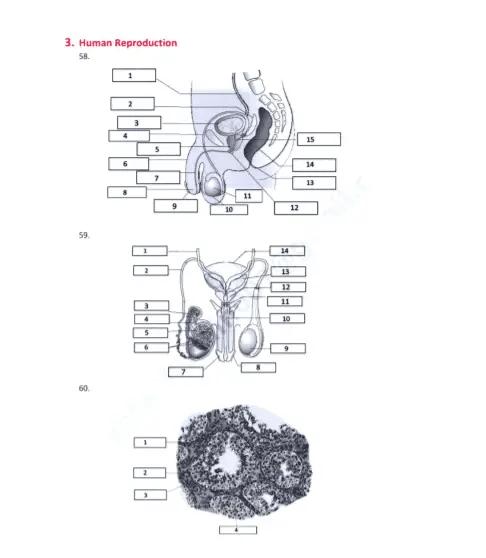 NCERT Biology Diagrams Pdf 1