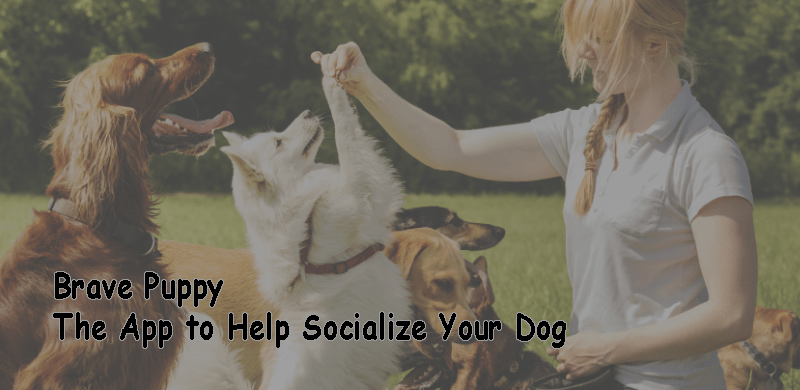Brave Puppy The App to Help Socialize Your Dog