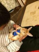 conejos vivos como carcasas de telefonos móviles 01