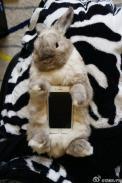 conejos vivos como carcasas de telefonos móviles 02