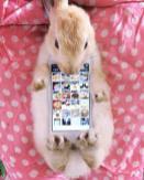 conejos vivos como carcasas de telefonos móviles 06