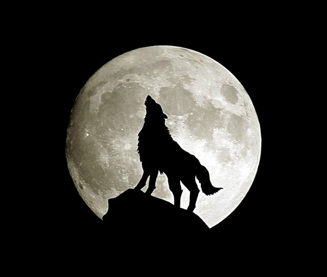 Wolf Howl Animal Dark Minimal Nature Android Wallpaper Android Hd Wallpapers