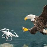 Drohnenabwehr: Raubvögel statt Laserkanonen