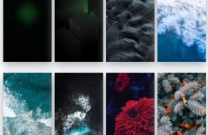 black shark stock wallpapers