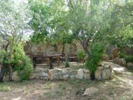 Elena's garden with a Bassam wall