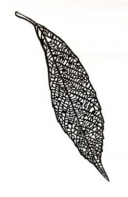 Black leaf
