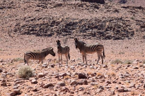 the Monthly Zebra Club meeting