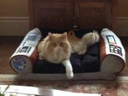 Luc in his new Star Trek Captain Chair